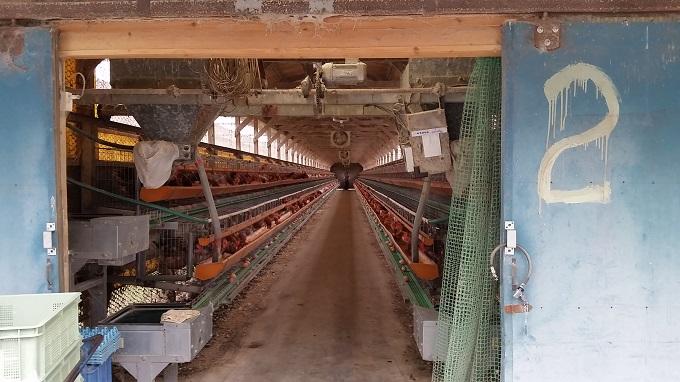 山田農場たまご 鶏舎