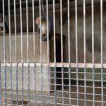 ミニ動物園がある小倉公園<美濃市>