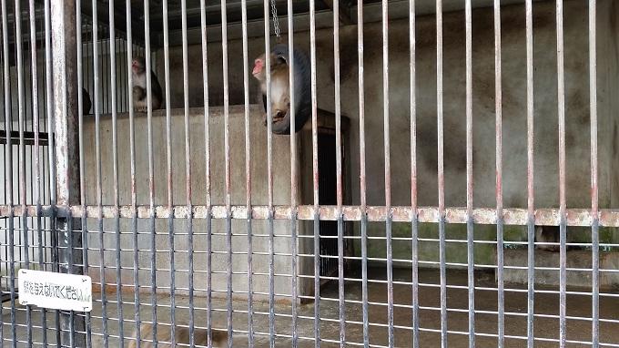 小倉公園 ミニ動物園 サル