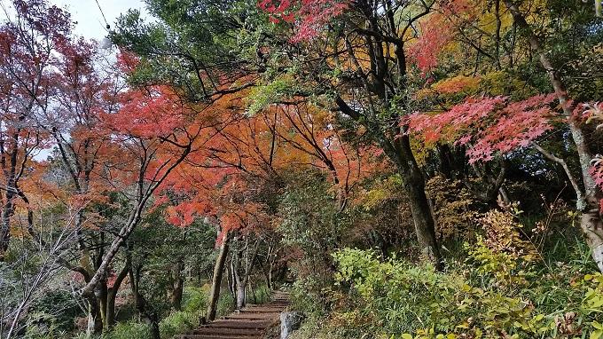 小倉公園 展望台 紅葉