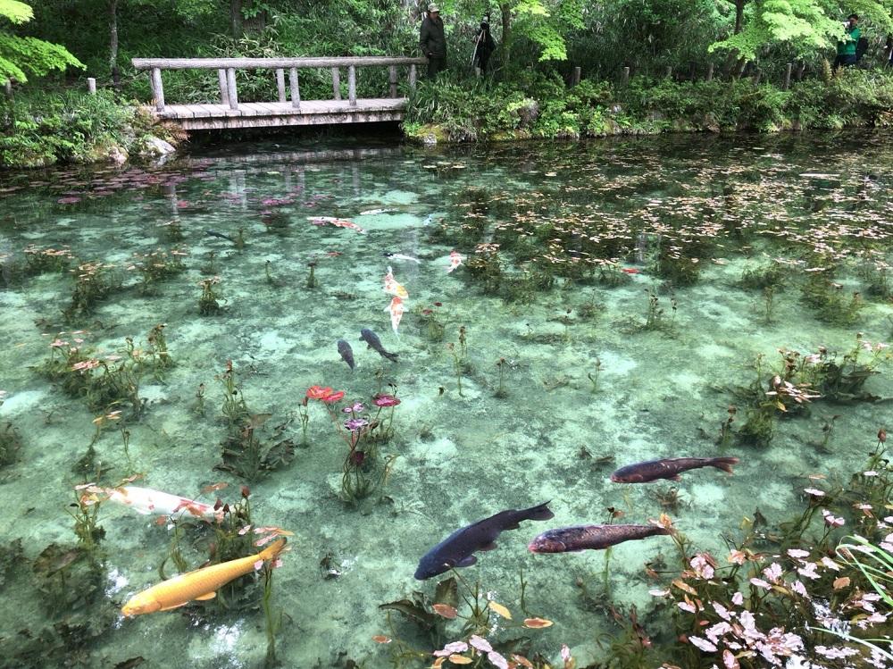 モネの池 春の写真