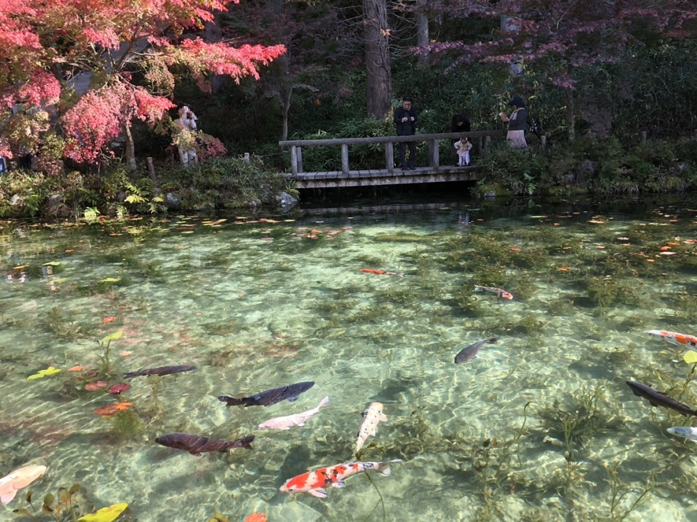 モネの池 見頃の紅葉