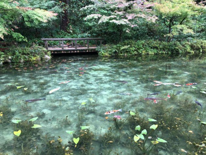 モネの池 秋の見頃