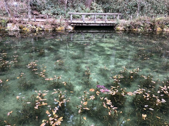 モネの池 冬の様子