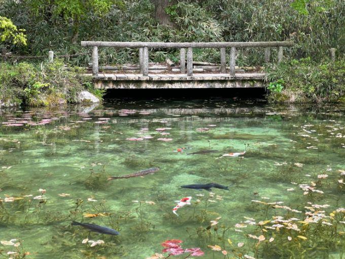 モネの池の4月の見頃