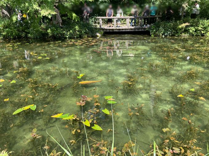 モネの池の見頃の天気
