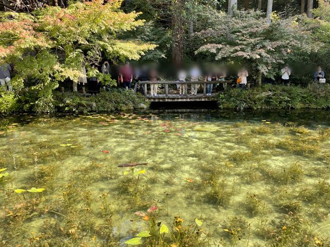 モネの池 紅葉の見頃