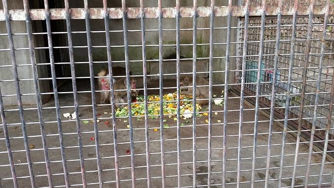 小倉公園 ミニ動物園 サルの餌やり
