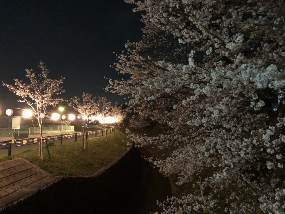関市桜の名所 関川 2018年3月27日夜 撮影