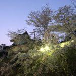 小倉公園の桜でお花見と季節限定茶屋を楽しむ<美濃市>