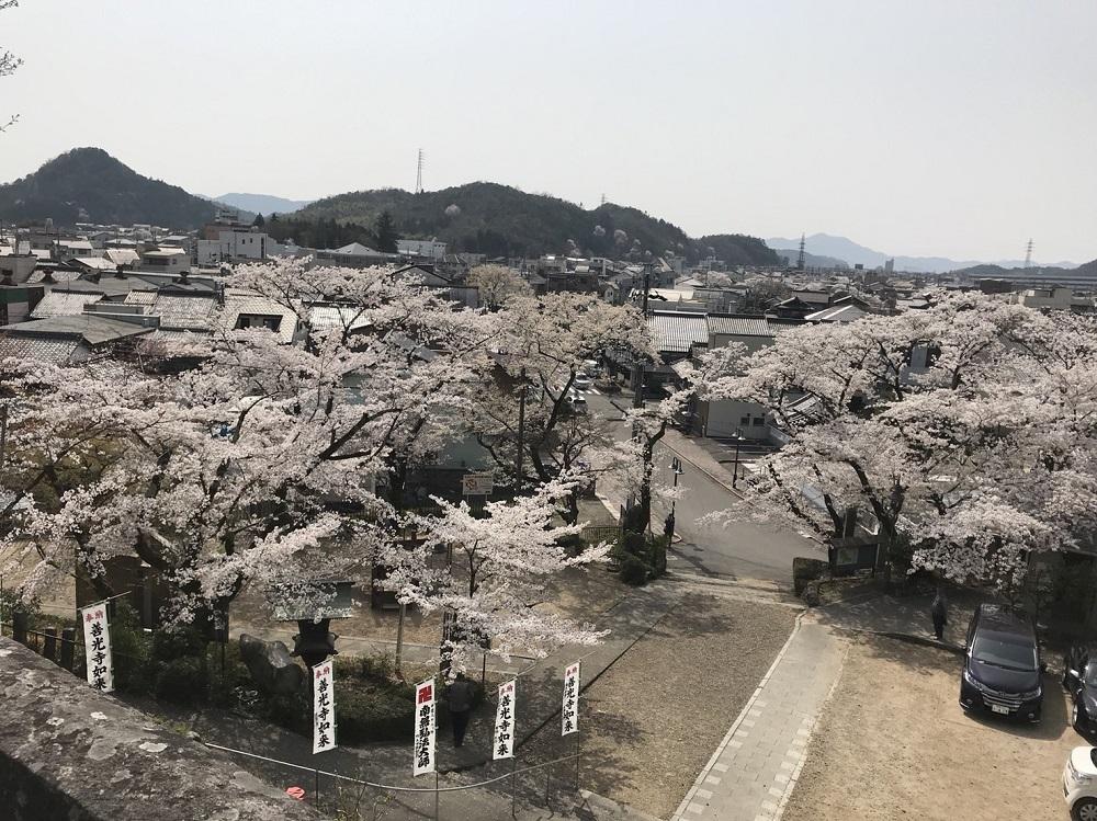 関市の桜の名所 関善光寺 2018年3月29日昼撮影