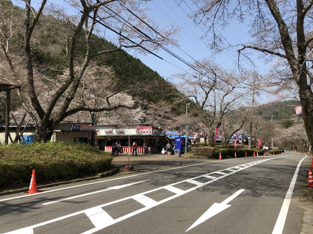 関市の桜の名所 寺尾ヶ原千本桜公園 2018年3月31日昼撮影