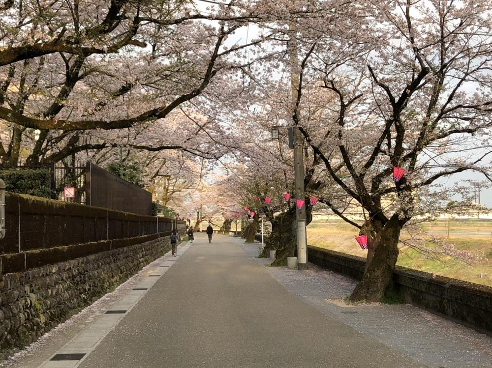 関市近郊の桜の名所 岐阜公園・長良川堤 2018年4月1日撮影
