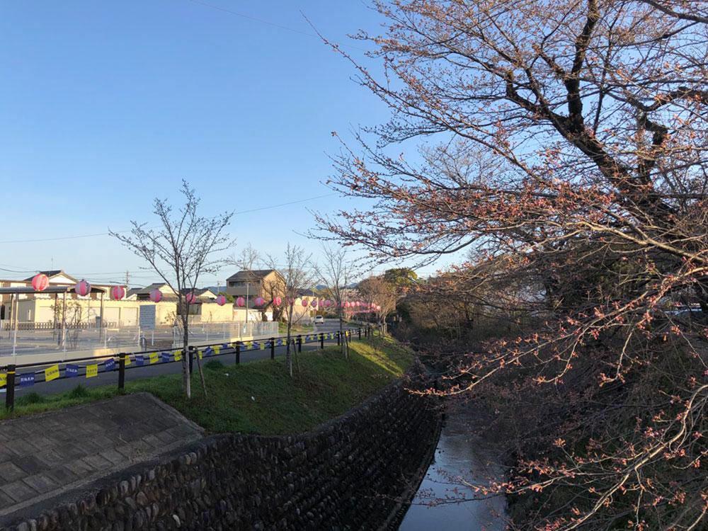 関市桜の名所 関川