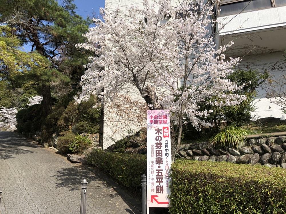 小倉公園の桜 季節限定茶屋の案内