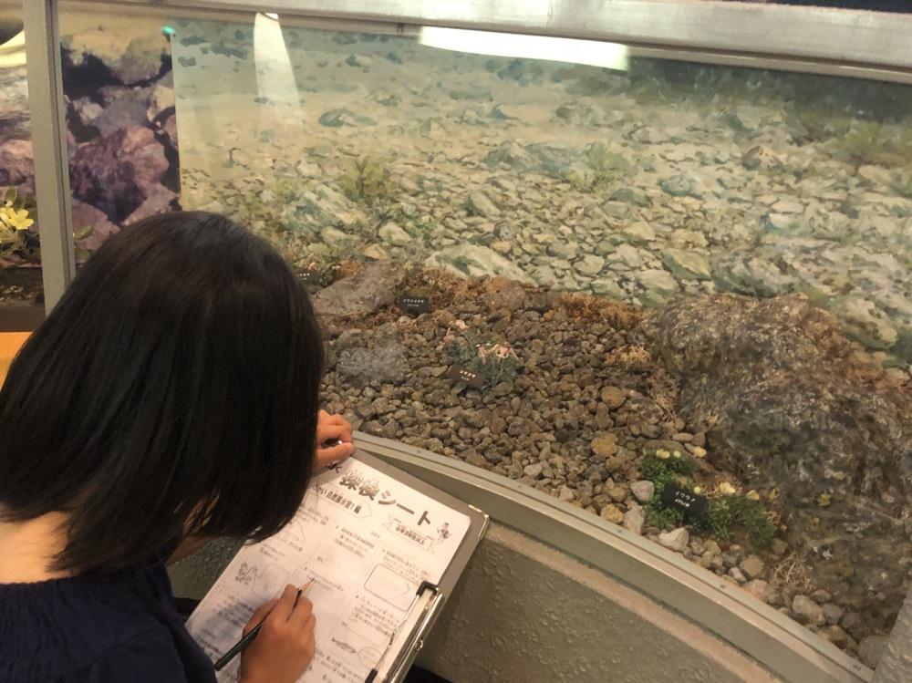 岐阜県博物館 けんぱく探検シートに挑戦中