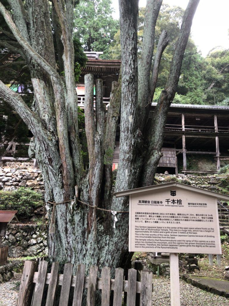 千本桧(天然記念物)