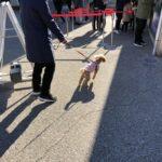 リトルワールドは愛犬と楽しめるおすすめテーマパーク