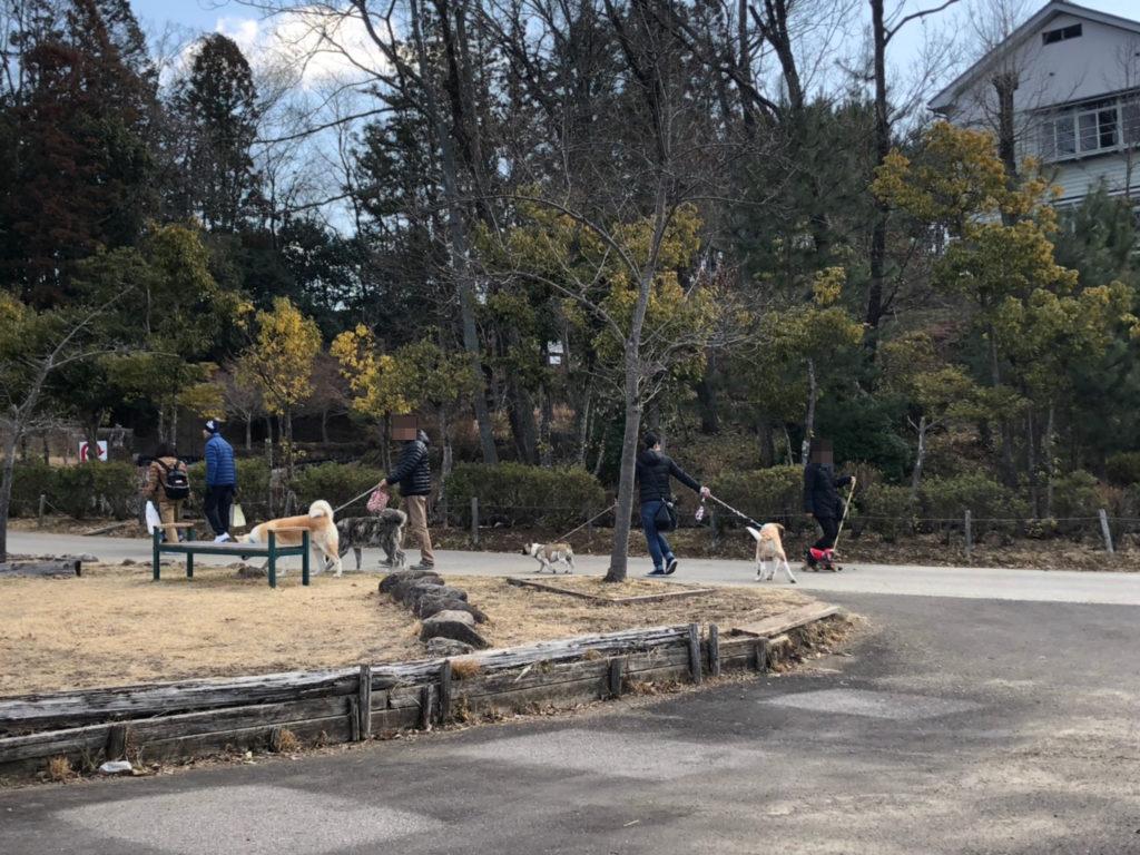 ぎふ清流里山公園 犬と散歩