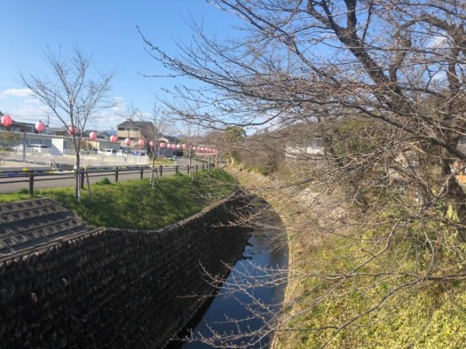 関市関川の桜の開花状況 3月23日