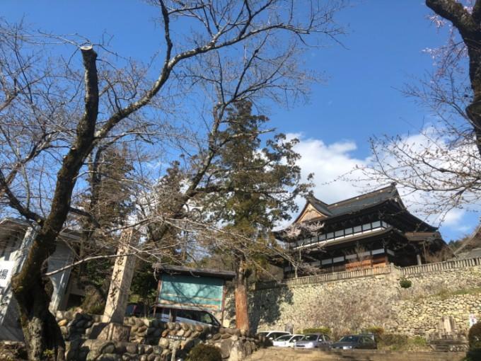 関市 善光寺 桜の開花状況 3月23日