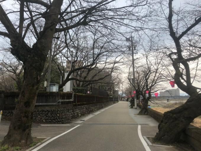 岐阜市長良公園 桜の開花状況 3月23日