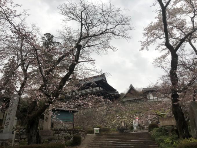 関市 善光寺 桜の開花状況 3月30日