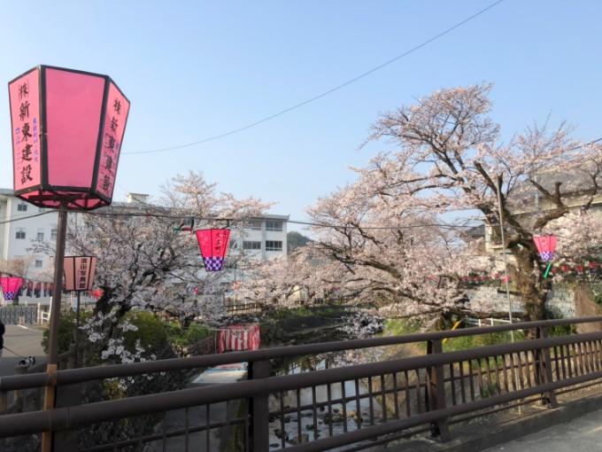 関市 吉田川 桜の開花状況4月6