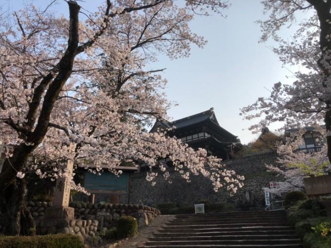 関市 善光寺 桜の開花状況 4月6日