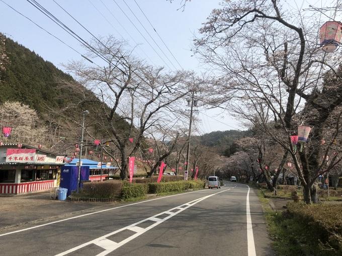寺尾ヶ原千本桜公園 桜の開花状況4月7日