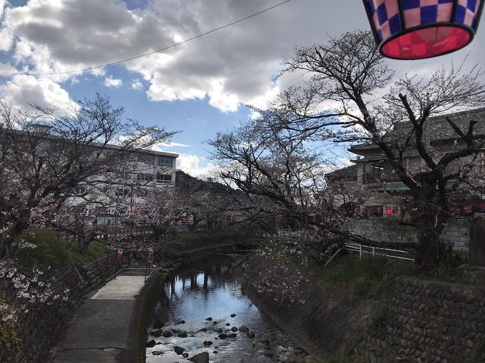 関市 吉田川 桜の開花状況4月1日