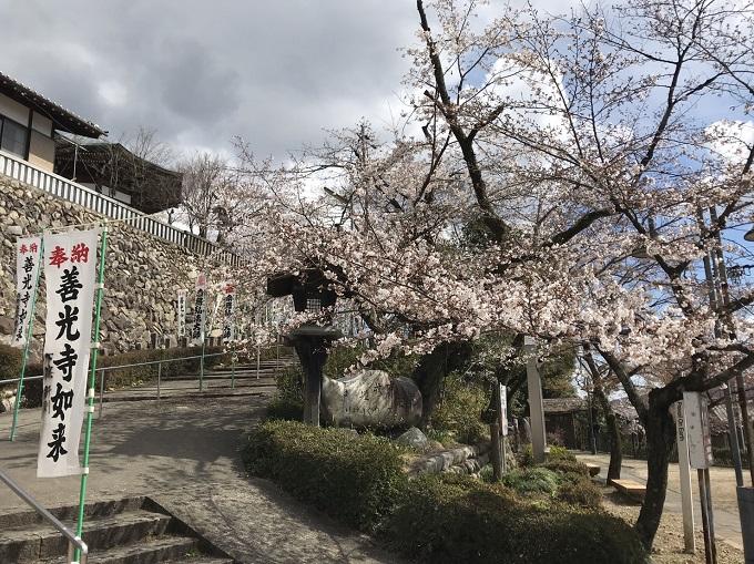 関市 善光寺 桜の開花状況 4月1日