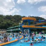日本モンキーパークのプール(モンプル)の楽しみ方