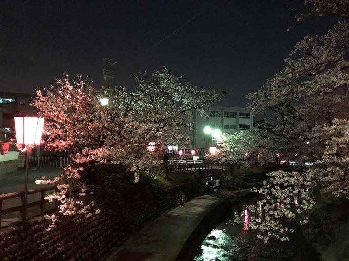 吉田川の桜 2020年4月3日