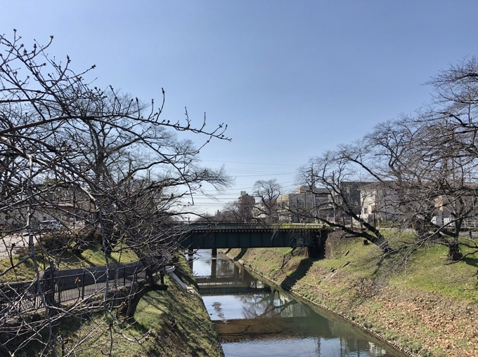 新境川・百十郎桜  2020年3月15日撮影