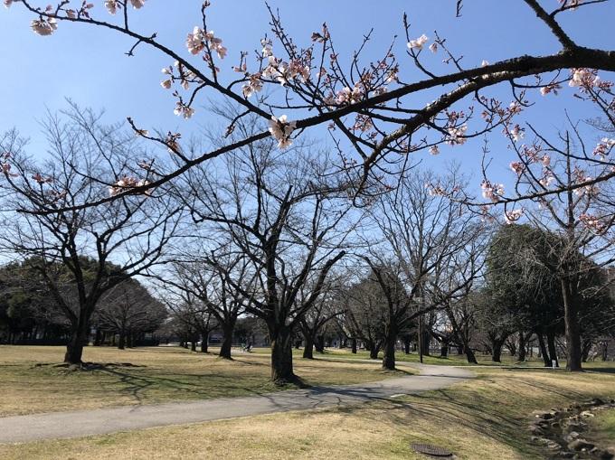 各務原公園  2020年3月15日撮影
