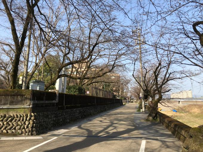 岐阜公園・長良川堤の桜 2020年3月21日