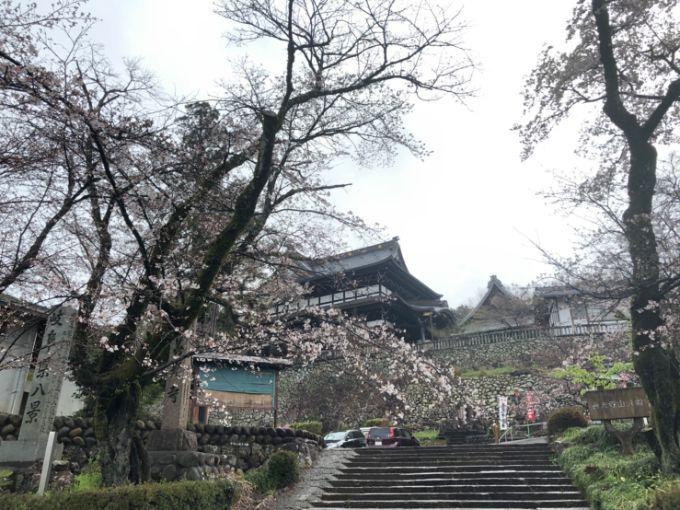 関善光寺の桜 2020年3月28日