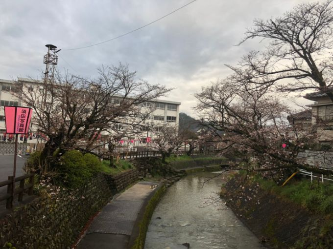 吉田川の桜 2020年3月28日