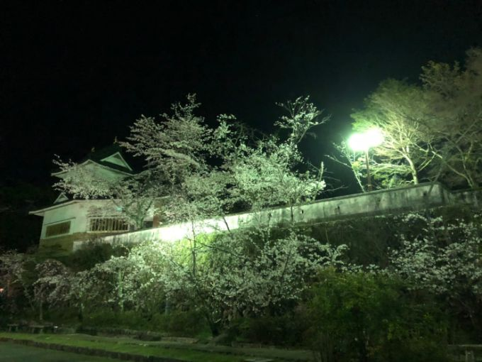 小倉公園の桜 2020年4月3日