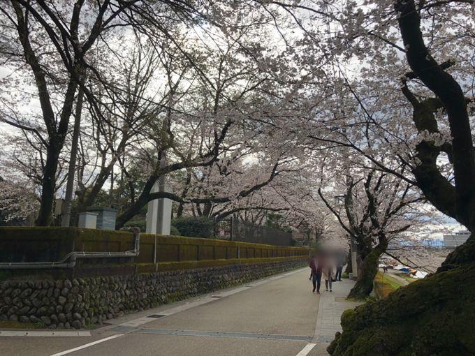 岐阜公園・長良川堤の桜 2020年4月3日