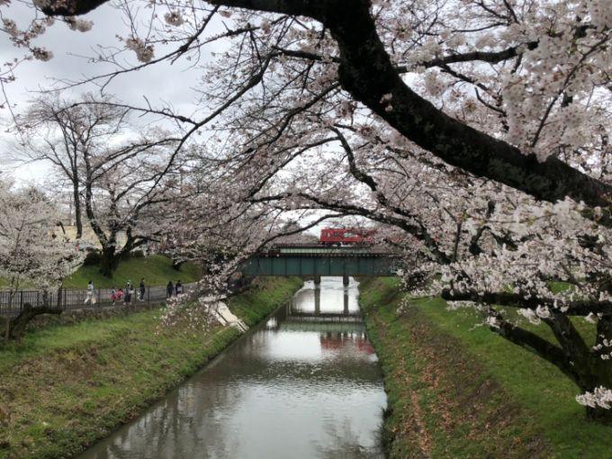 新境川・百十郎桜 2020年3月29日撮影