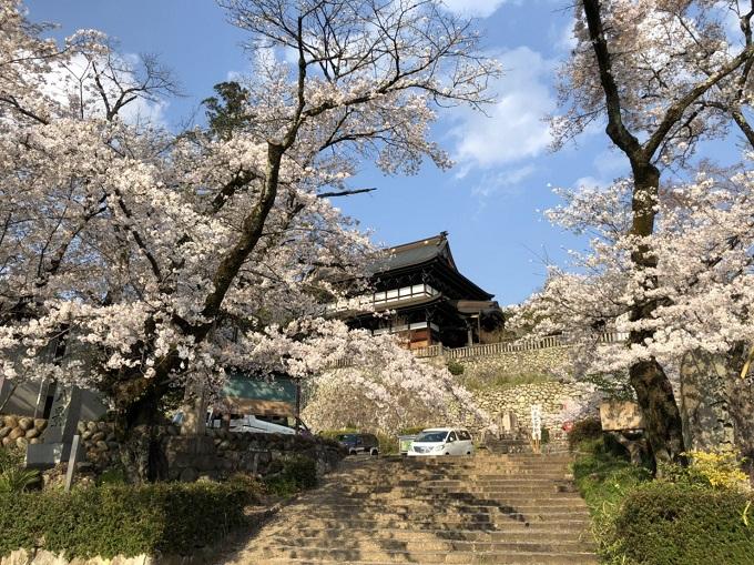 関善光寺の桜 2020年4月5日