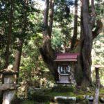 神秘的な21世紀の森公園にある株杉の森