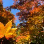 大矢田神社もみじ谷の紅葉と御朱印