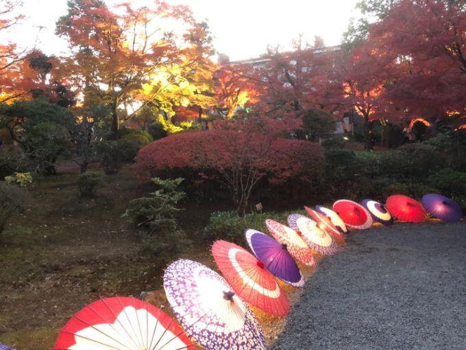 紅葉と和傘のライトアップ