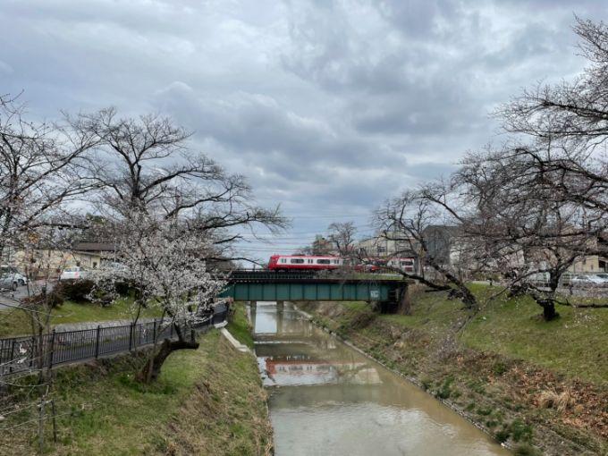 新境川・百十郎桜の開花状況 2021年3月20日