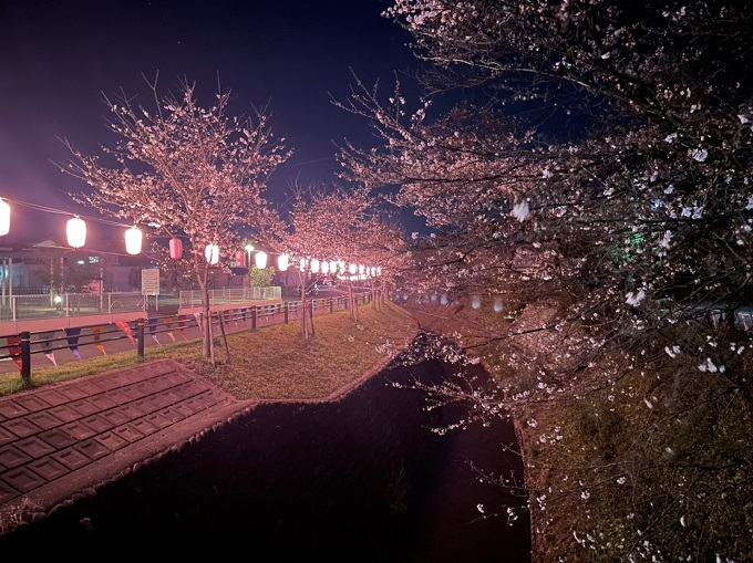関川の桜 2021年3月22日