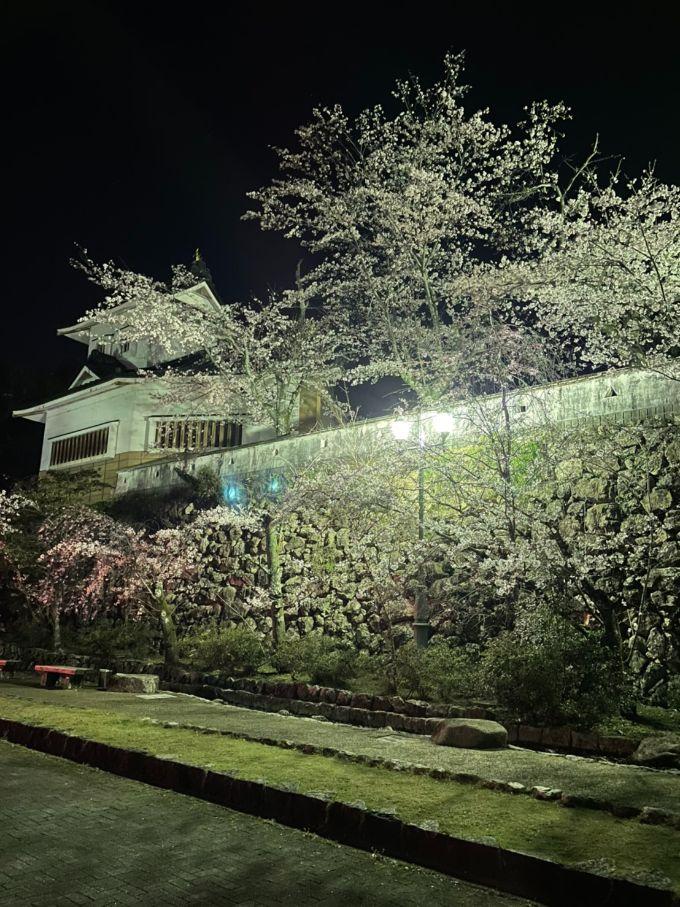 小倉公園の桜 2021年3月26日