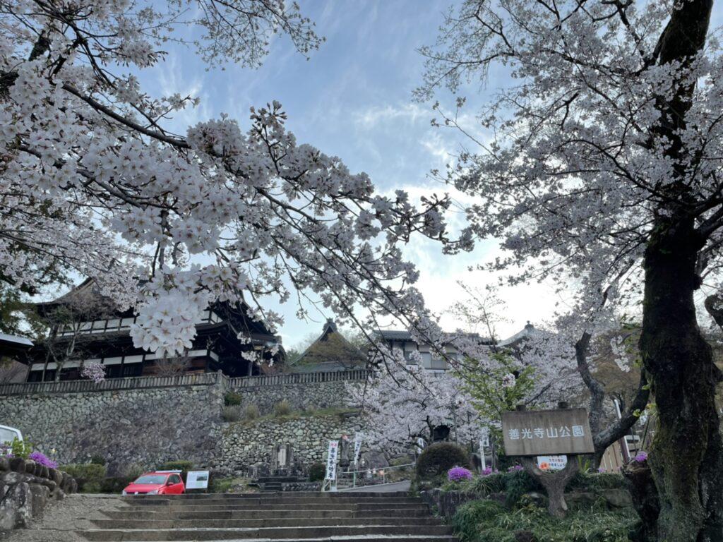 関善光寺の桜 2021年3月27日